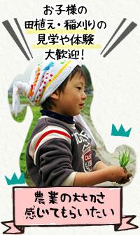 お子様の田植え・稲刈りの見学や体験大歓迎!